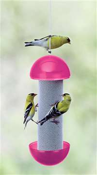 Have-A-Ball Finch Feeder